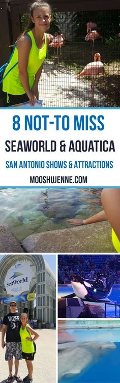 8 not-to miss SeaWorld & Aquatica San Antonio Shows & Attractions. It might be no secret that my husband, daughter, and I visited SeaWorld this summer. After tons of discussions of what to do and where to go we finally ended up with the idea to take our d