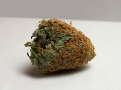 looks like a strawberry.. #The best seeds http://www.spliffseeds.nl/silver-line/blue-berry-seeds.html ( marijuana cannabis ) https://pinterest.com/thathighguy