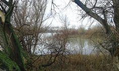 Río Gallego desembocando en el Ebro
