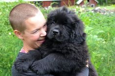 Getting a Newfoundland dog. Tips and thoughts about buying a Newfoundland dog. Swedish countryside life with a dog. Newfoundland, Countryside, Thoughts, Dogs, Cute, Stuff To Buy, Animals, Animales, Animaux