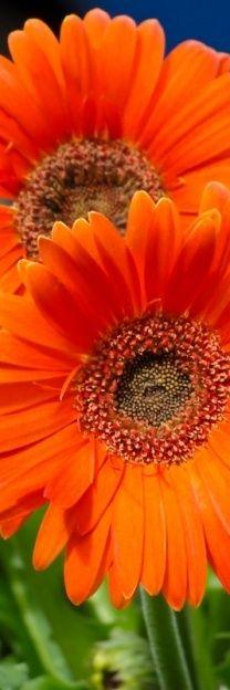 ●••°‿✿⁀Orange‿✿⁀°••●