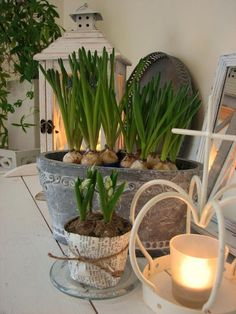 Wrap a potted bulb in paper + twine by Patrina