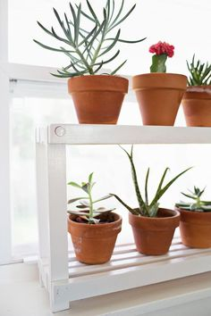 DIY Window Plant Shelf| Do you have too many plants to store in your windows? This window shelf provides multiple tiers to keep all of your plants in the sun! Window Shelf For Plants, Window Shelves, Window Ledge, Plant Shelves, Wooden Plant Stands, Diy Plant Stand, Balcony Plants, Cool Plants, Hanging Plants