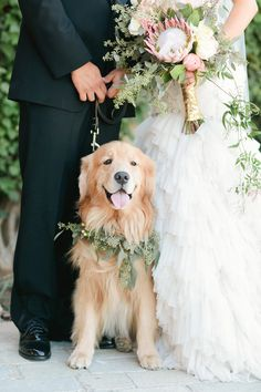 Dogs in Weddings Trend - From the Marrygrams Blog: Bride's Best Friend - Cutest Ways to Include Your Dog in Your Wedding