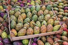 Step-by-step instructions for harvesting prickly pear fruit, removing the prickles and seeds, and making delicious jelly.