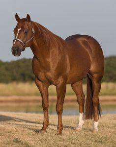 Quarter Horse stallion Boon San-SR