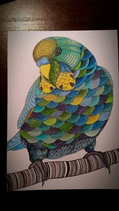coloring ideas-budgie
