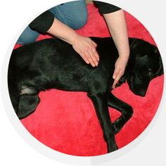 Canine Physiotherapy #Dogs