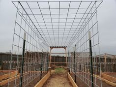Trellis Tunnel. This one using 3 cattle panels (16'x5.2') and six T-posts.