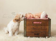 newborn with dog ShihTzu