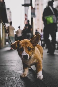 captvinvanity:  Little puppy | Photographer | CV