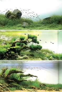 Aquariums that look like above water landscapes