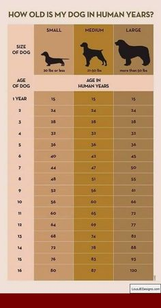 Your Dog's Age In Human Years: A Conversion Chart Your Dog's Age In Human Years: A Conversion Chart Dog years calculator infographic Dog Care Tips, Pet Care, Puppy Care, Pet Tips, I Love Dogs, Cute Dogs, Dog Information, Info Dog, Dog Ages