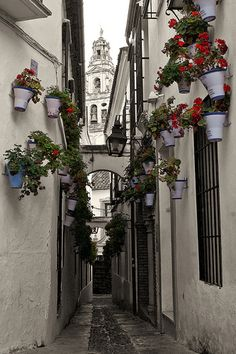 a back alley Places Around The World, Oh The Places You'll Go, Great Places, Places To Travel, Places Ive Been, Beautiful Places, Places To Visit, Cordoba Andalucia, Cordoba Spain