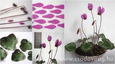 Cyclamen europaeum (Erdei ciklámen) - My clay flower… Handmade Flowers, Diy Flowers, Fabric Flowers, Paper Flowers, Diy Clay, Clay Crafts, Paper Crafts, Flower Crafts, Flower Art