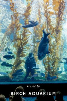 What to know about visiting Birch Aquarium in San Diego [ad] California With Kids, La Jolla California, Southern California, San Diego Area, San Diego Zoo, Birch Aquarium, La Jolla San Diego, San Diego Attractions, Family Vacation Destinations