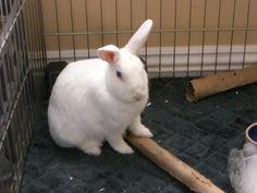 my bunny Pixie