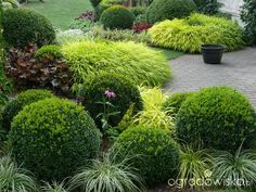 Ogrd May, Ale Pojemny - Strona 135 - Forum Ogrodnicze - Ogrodowisko Landscape Plans, Landscape Design, Garden Design, Side Garden, Lawn And Garden, Hydrangea Garden, Ornamental Grasses, Back Gardens, Tropical Garden