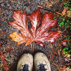 Autumn in Oregon!