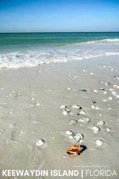 Are you a fan of remote beaches with fantastic shelling that are only accessible by boat?? Then Keewaydin Island off the southwest coast of Florida is for you!! #keewaydinisland #familytravel #beachtrip #visitflorida #florida #floridabeaches #shelling South Beach Florida, Visit Florida, Destin Beach, Florida Vacation, Florida Travel, Beach Trip, Vacation Spots, Gulf Coast Beaches, Florida Beaches