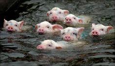 swim swim swim swim