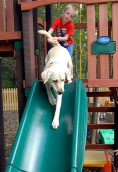 Autism service dogs. #animals #pet. Unconditional love: http://www.pinterest.com/newdirectionsbh/unconditional-love/