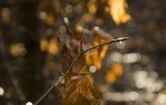#Nature #landscape #autumn