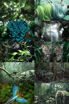 """ecosystems → tropical rainforest """"occur in areas of tropical rainforest climate in which there is no dry season – all months have an average precipitation of at least 60 mm – and may also be referred to as lowland equatorial evergreen rainforest...."""