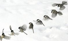 bird landing animation - Google Search
