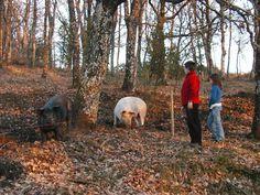 Agritourism - Farm Holidays La Cerqua e La Balucca Farm Holidays, Animals, Europe, Vacation, Animales, Animaux, Animal, Animais