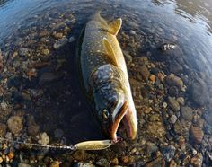 You Don't Need Downriggers—or Even a Boat—to Hook Big Late-Fall Lake Trout | Field & Stream