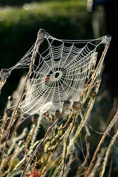 Spider web - photo by FranceHouseHunt.com