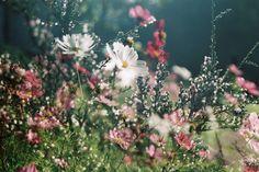 flowers, pink, and garden Bild