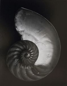 Edward Weston ~ Nautilus Shell, 1927. Signed print sold in 2014 for $461,000.    http://www.christies.com/lotfinder/Lot/edward-weston-1886-1958-nautilus-shell-1927-5827333-details.aspx/   http://artsbeat.blogs.nytimes.com/2014/08/25/edward-weston-photos-to-be-auctioned/   http://articles.courant.com/2006-09-10/entertainment/0609080310_1_flora-chandler-weston-s-work-charis-wilson