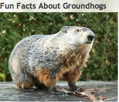 Groundhog Day ideas