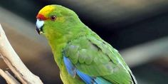 Какого попугая завести? Советы заводчика - Pusiki Parrot, Bird, Animals, Parrot Bird, Animales, Animaux, Birds, Animal Memes, Animal