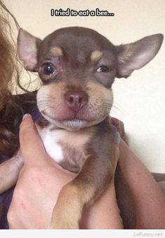 Funny little dog tried to eat a bee