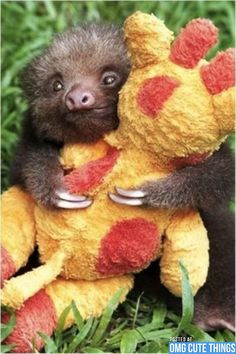 Baby sloth and his stuffed animal
