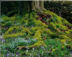 Caroline Heaven Postcard Size, How To Raise Money, Landscape Design, Heaven, Country Roads, Gardens, Plants, Outdoor, Outdoors