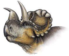 The Wendiceratops pinhornenis dinosaur is seen in a life reconstruction illustration.
