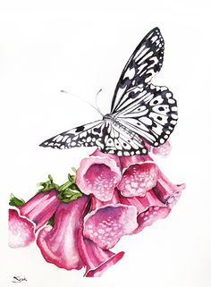 Butterfly-Original watercolors painting, Watercolour painting by Karolina Kijak | Artfinder