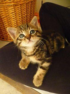 DOUDOU - vedette de notre CONCOURS Photo mensuel chat, chien, animaux. participez ici >> http://www.verlina.com/concours-photo.php