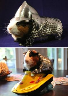 Shut Up and Take My Money of the Day: A Guinea Pig Armor Suit - not sure if this should go into cosplay....