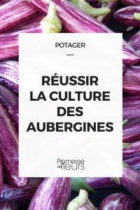 Aubergine : réussir leur culture Potager Bio, Potager Garden, Garden Plants, Garden Online, Horticulture, Compost, Vegetable Garden, Gardening Tips, Food To Make
