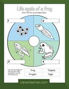 Life cycle of a frog worksheet for preschool #science #frog #lifecycle