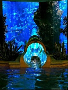 Water slide though an exotic fish tank. When I become a billionaire, I am so going to blow my money on this!