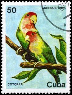 Cuban Parrots
