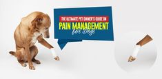 Ultimate Gide on pain Management for Dogs Meds For Dogs, Lhasa Apso, Pain Management, Humor, Dog Care, I Love Dogs, Pet Birds, Your Dog, Pets