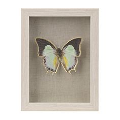 $12 butterfly shadowbox 2