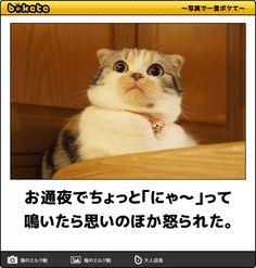 お通夜でちょっと「にゃ~」って鳴いたら思いのほか怒られた。 Animals And Pets, Cute Animals, Mammals, Funny Cats, Comedy, Kawaii, Humor, History, Memes
